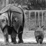 Basler Zoo - Rhinos