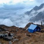 'Jungle Camp'