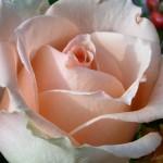 Blumendetail und Wiesen (10)