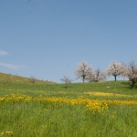 Blumendetail und Wiesen (11)