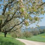Blumendetail und Wiesen (12)