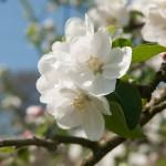 Blumendetail und Wiesen (13)