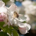 Blumendetail und Wiesen (14)