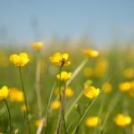 Blumendetail und Wiesen (15)