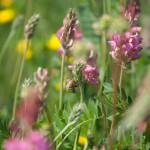 Blumendetail und Wiesen (16)