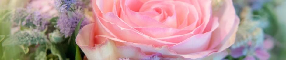 Blumendetail und Wiesen (18)