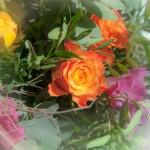 Blumendetail und Wiesen (20)