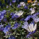 Blumendetail und Wiesen (24)