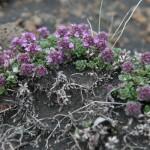 Blumendetail und Wiesen (4)
