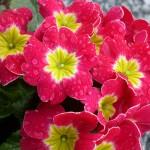 Blumendetail und Wiesen (8)