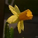 Blumendetail und Wiesen (9)